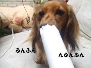 010_20081118222050.jpg