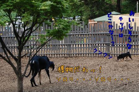 20080516-2-1.jpg