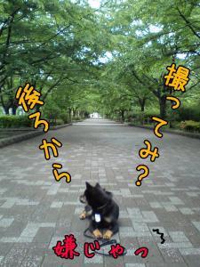 20080530-005.jpg