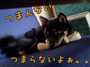 20080530-01.jpg