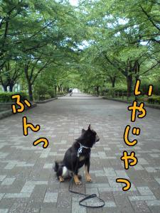 20080530-04.jpg