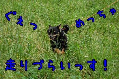 20080608-004.jpg