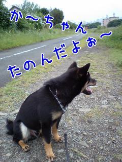 20080623-003.jpg