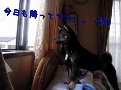 20080824-001.jpg