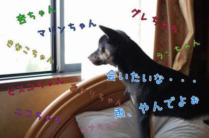 20080917-05.jpg