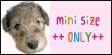 minisize-only.jpg