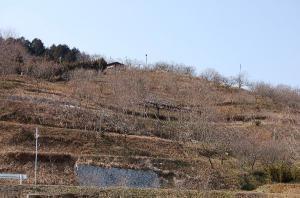 梅の里公園(2月19日)