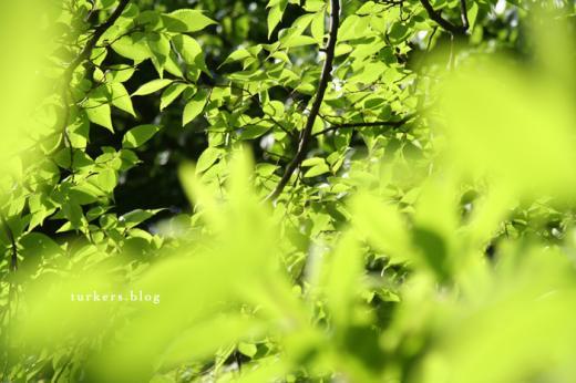 光る葉っぱ