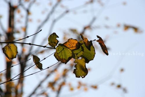 枯れ葉とくしゃみ turkers.blog