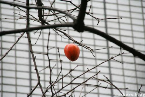 柿の木 Persimmon Tree