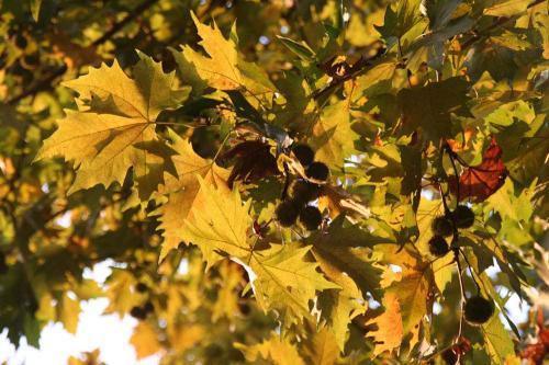 日比谷公園 秋