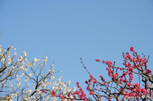 小さな春 turkers.blog