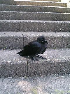crow02.jpg