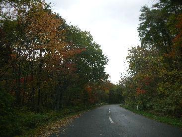 平山の紅葉