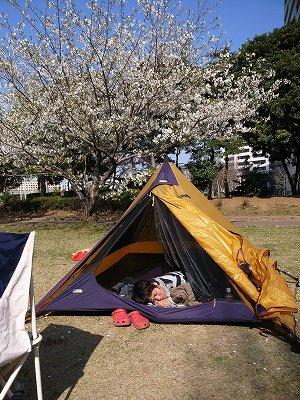 お花見キャンプ2008_2