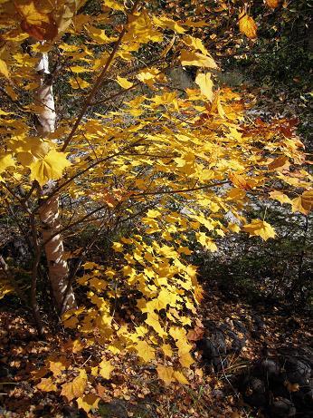 秋の上高地 004
