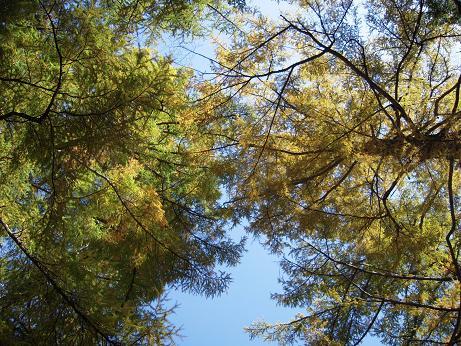 秋の散歩(左岸) 006
