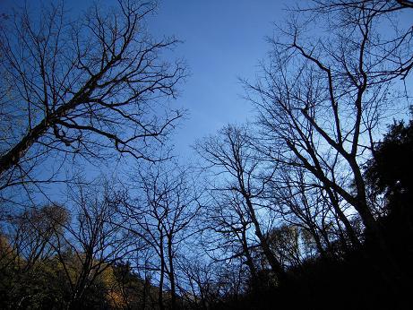 秋の散歩(左岸) 010