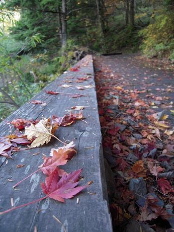 秋の散歩(左岸) 016