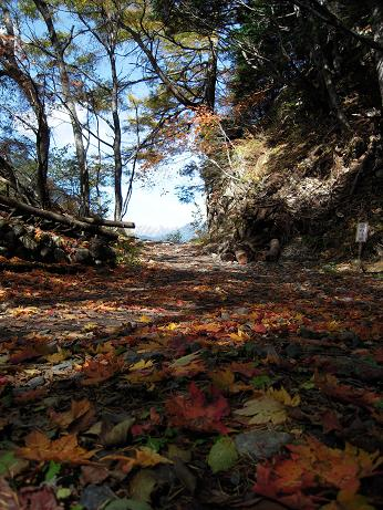 秋の散歩(左岸) 019