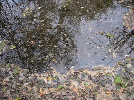 秋の散歩 005
