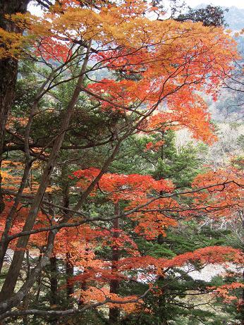 秋の散歩 010