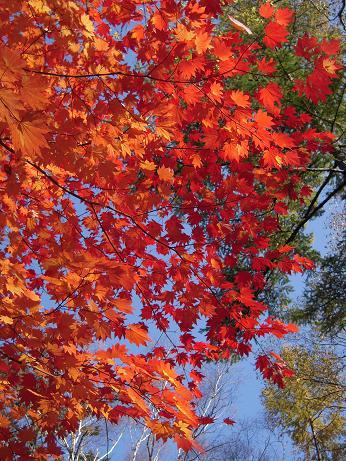 上高地の秋 014