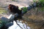 京都御苑2008春 011