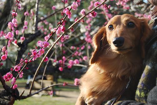 京都御苑2008春 057316