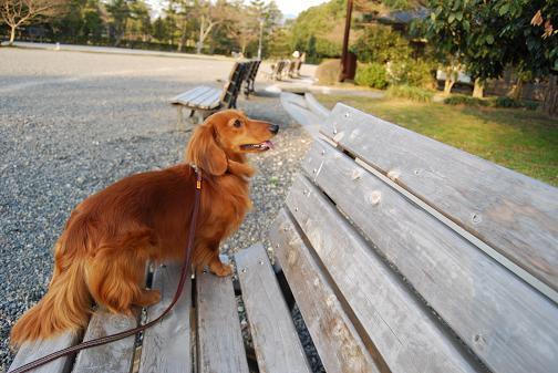 京都御苑2008春 078316