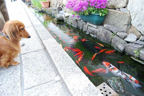 彦根2008春 008blog