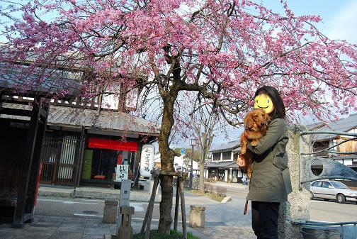 彦根2008春 052blog