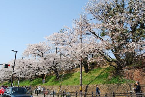京都桜2008春 002 blog