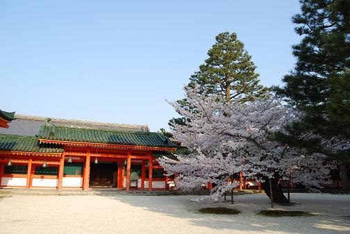 京都桜2008春 031blog