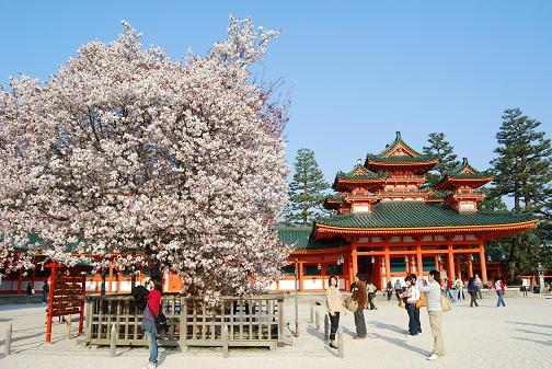 京都桜2008春 016