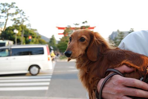 京都桜2008春 096blog
