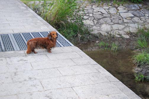 2008.07 060びしょぬれ
