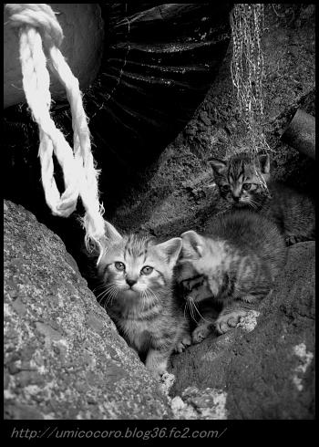 横磯の子猫だよ。。。
