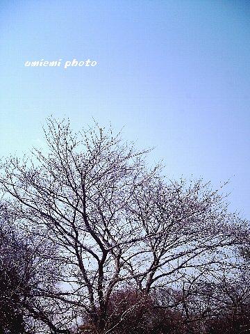 裸んぼうの枝