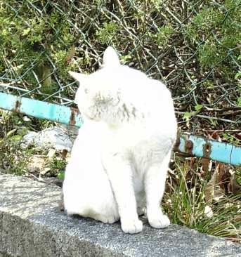 龍神社の猫.2
