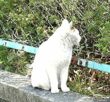 龍神社の猫