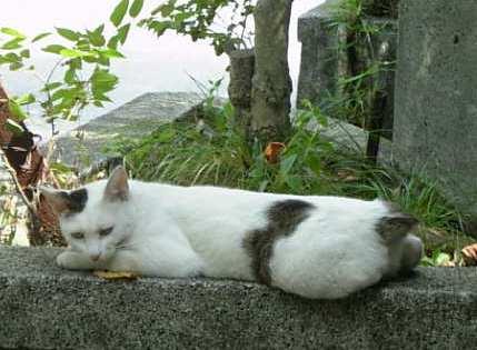 龍神社の猫3