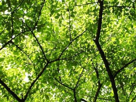 2008.5月名古屋城の木