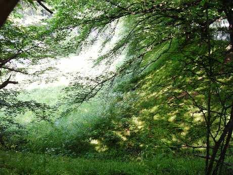 2008.5月名古屋城のお堀の中