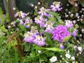 何だったっけか、この花ぁぁぁ 綺麗だわ~♪