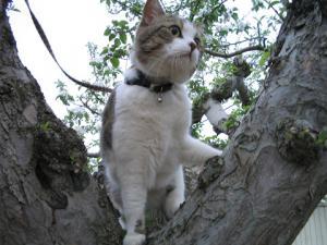 またまた木登り