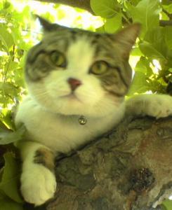 木に登ったり