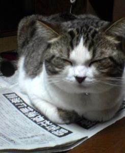 新聞の上で寝るのは…