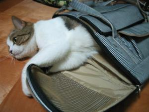 ※これはキャリーバッグです