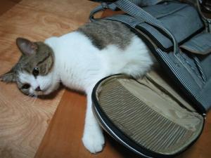 ※これはキャリーバッグのはずです